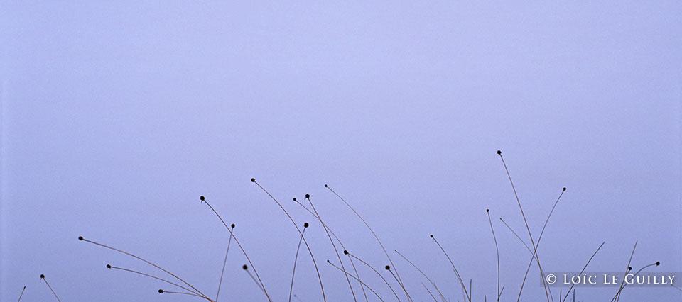 buttongrass on fog