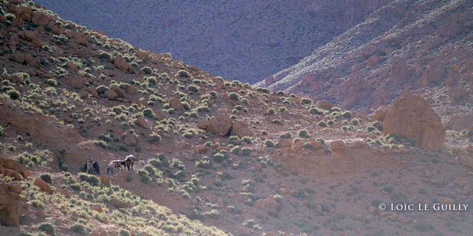 Todra mules
