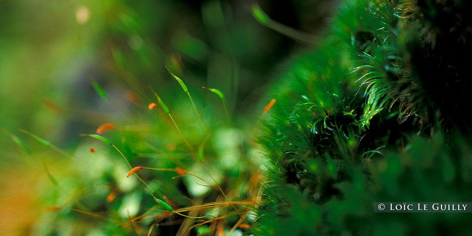 Tarkine moss